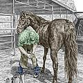 Trim And Fit - Farrier And Horse Print Color Tinted by Kelli Swan