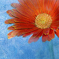 Triptych Gerbera Daisy-one by Betty LaRue