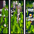 Triptych Of Water Hyacinth by Kathy Clark