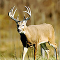 Trophy Buck by Randall Branham