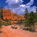 Tropic Canyon In Bryce Canyon Park by Rich Walter