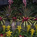 Tropical 1 by Wanda J King
