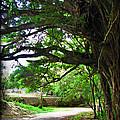 Tropical Banyan Path by Joan  Minchak