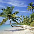 Tropical Beach by Bjorn Svensson