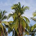 Tropical Cliche by Heiko Koehrer-Wagner