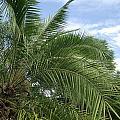 Tropical Days by Rani De Leeuw