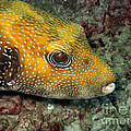 Tropical Fish by MotHaiBaPhoto Prints