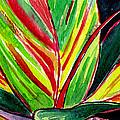 Tropical Foliage by Brenda Owen