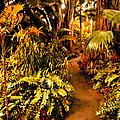 Tropical Forest by Amy Vangsgard