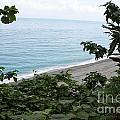 Tropical Island by Maxine Bochnia