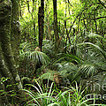 Tropical Jungle by Les Cunliffe