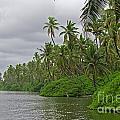 Tropical Jungle by MotHaiBaPhoto Prints