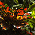 Tropical Leaves by Karl Voss