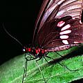 Tropical Rainforest Butterfly by Thomas R Fletcher