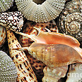 Tropical Shells by Kaye Menner