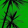 Tropical Splash by Ed Smith