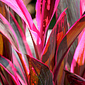 Tropical Vision II by Suzanne Gaff