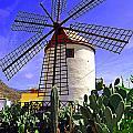 Tropical Windmill by Rob Hawkins