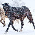 Trotting In The Snow by Betsy Knapp
