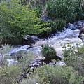 Trout Creek by Linda Larson