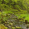 Trout Run Creek 4 by John Brueske