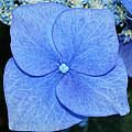 True Blue. by Terence Davis