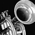 Trumpet Up Front by M K Miller