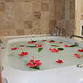 Tub Of Hibiscus by Shane Bechler