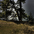 Tubbs Hill On Lake Cd'a by Grover Woessner