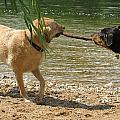 Tug Of War by Diana Ogaard