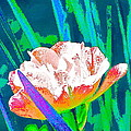 Tulip 45 by Pamela Cooper