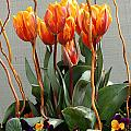 Tulip Arrangement by Mike Nellums