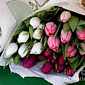 Tulip Bouquet  by Lainie Wrightson