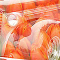 Tulip Car Abstract by Randy Harris
