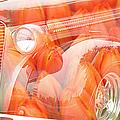 Tulip Car Abstract by Randy Harris