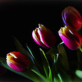 Tulip Dream by Linda Tiepelman