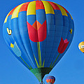 Tulip Hot Air Balloon by Elizabeth Rose