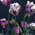 Tulip Springtime Memories by Byron Varvarigos