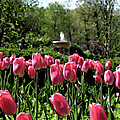 Tulips And Fountain by Jack Schultz