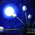 Tulips In Blue Moonlight by Laura Iverson