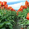 Tulips by Jaime Hernandez