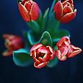 Tulips On Black by Tanya Polevaya