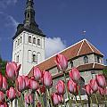 Tulips Outside Niguliste Church by Axiom Photographic