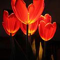 Tulips by Rebecca Samler