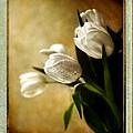 Tulips Side Sepia by Linda Olsen