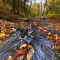 Tumbling Leaves by Debra and Dave Vanderlaan