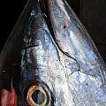 Tuna Head At Fish Market by Perry Van Munster
