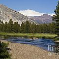 Tuolumne Meadow by Jim And Emily Bush