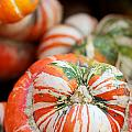 Turban Squash by Brooke Roby
