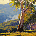 Turon Gum Tree by Graham Gercken